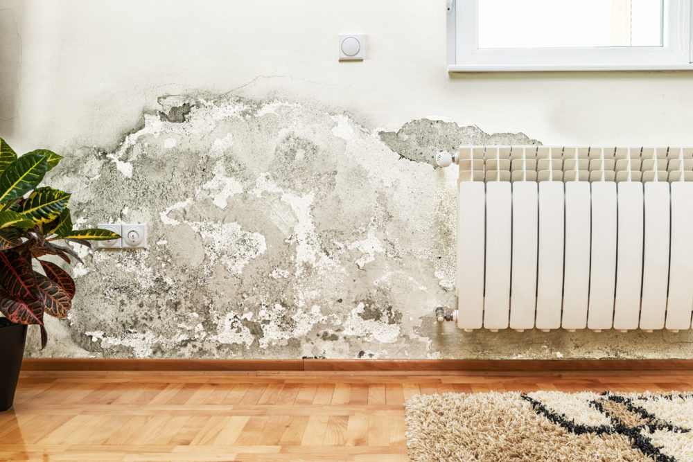 Mold Removal Costs & Money Saving Tips