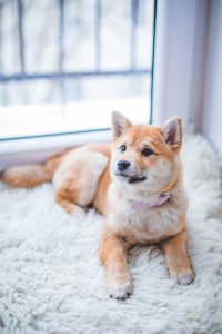 pet odor and stain removal Idaho Falls ID