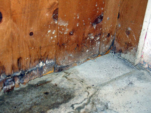 Mold removing services in Idaho Falls can clear out mold in your home